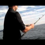 Halibut fishing video